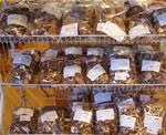 農産品シイタケ画像